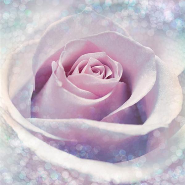 پوستر سه بعدی - XXL2-020 Delicate Rose