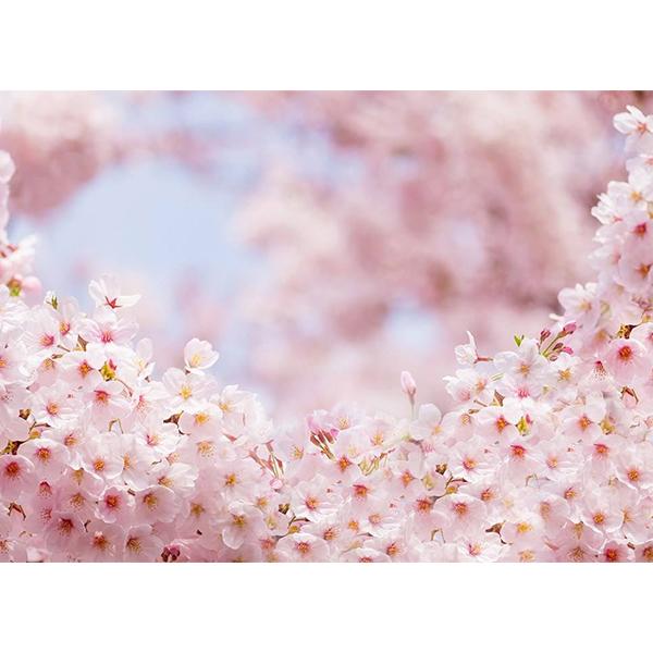 پوستر طرح Spring flower