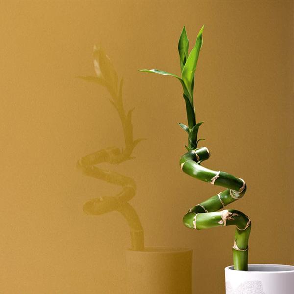 شیشه رنگی لاکوبل - Brown
